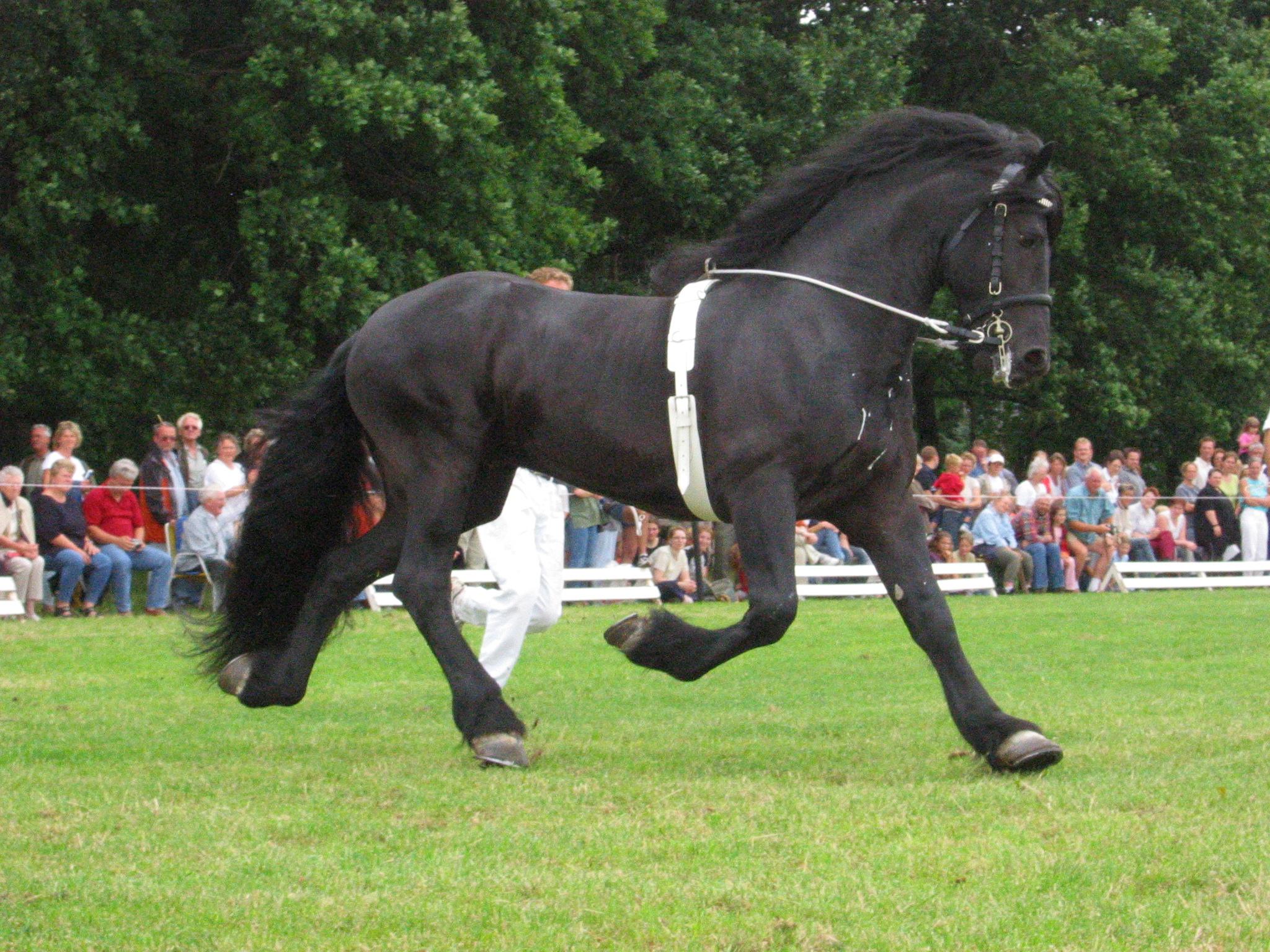 Assicurazione animali per il cavallo cosa copre - Assicurazione casalinghe inail cosa copre ...
